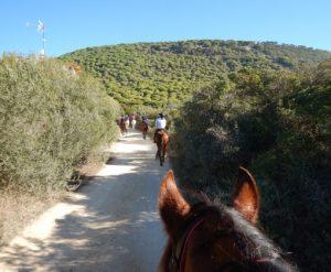 Horse Riding Los Alamos